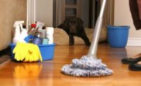 Airbnb's New Cleaning Guidelines COVID