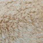 carpet cleaning chicago wool